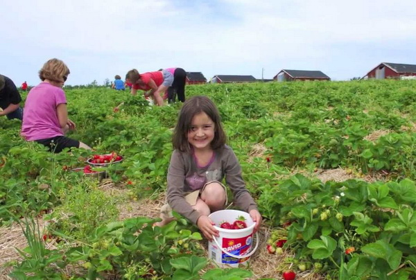 Long term strategy needed to nurture agritourism
