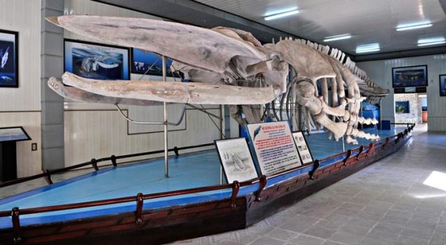 Meeresmuseum von Vietnam