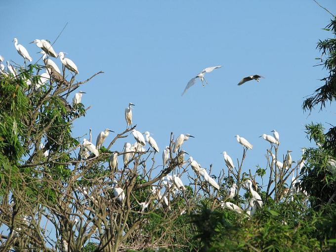 Tan Long Stork Garden